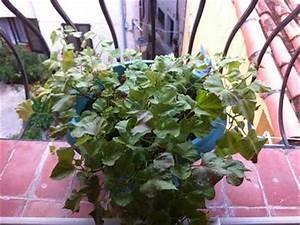 Culture De La Patate Douce : faire germer les patates douces ~ Carolinahurricanesstore.com Idées de Décoration