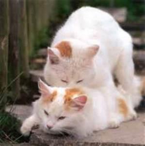 Wie Fange Ich Eine Katze : bin ich eine katze ~ Markanthonyermac.com Haus und Dekorationen