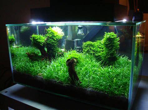 Mein Fluval Edge Nanobecken  Aquarienvorstellung Der
