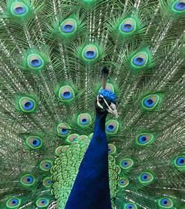 Dcouvrez 20 Extraordinaires Animaux Bleus Une Couleur
