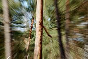 File:Zoom effect.jpg - Wikimedia Commons