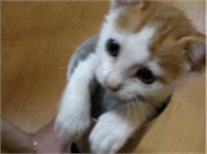 Pop-Up Kitten | Funny Cat Gifs [ANIMATED GIF] - Give Up ...
