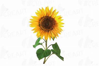 Sunflower Watercolor Clip Decoration Pack Watercolors Decor