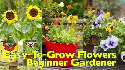 10 Easy To Grow Flowers For The Beginner Gardener Youtube