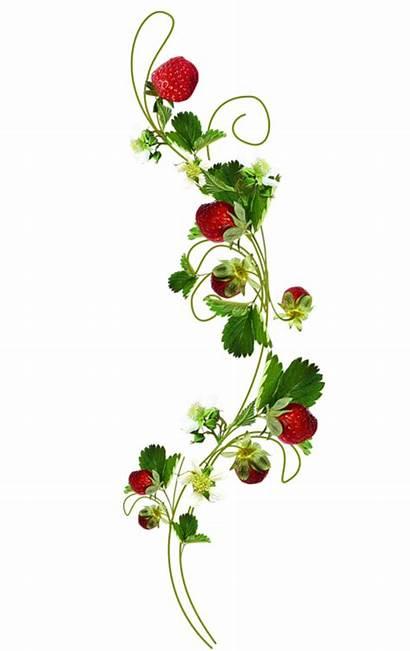 Strawberry Morangos Clipart Gratis Fresas Purplefolie2 Photoshop