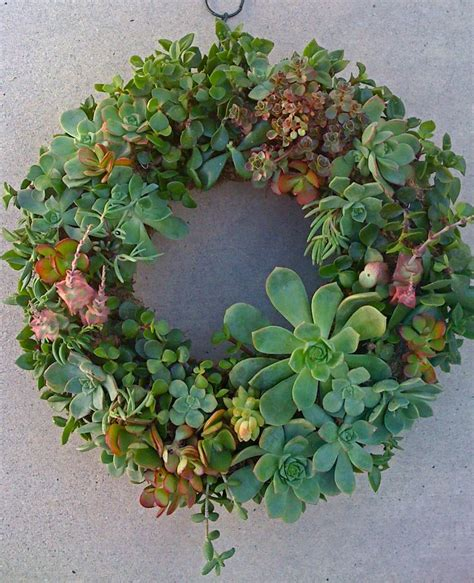 succulent wreath succulent plant diy succulent wreath 65 succulent