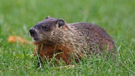 Backyard Animals by If The Animals Living In Your Yard Harm Your