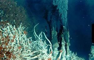 Strange creatures - the deep ocean floor