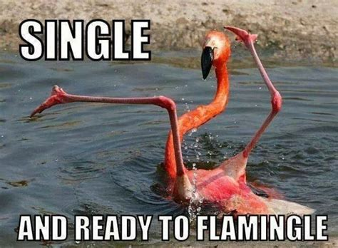 Single Ladies Meme - 149 best funny bird memes images on pinterest funny animals funny animal and funny animal pics