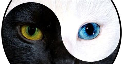 yin  cat edition atpatriciavool future tattoos