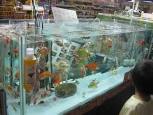 aquarium en coin a vendre nenuphar et poisson coucou du japon