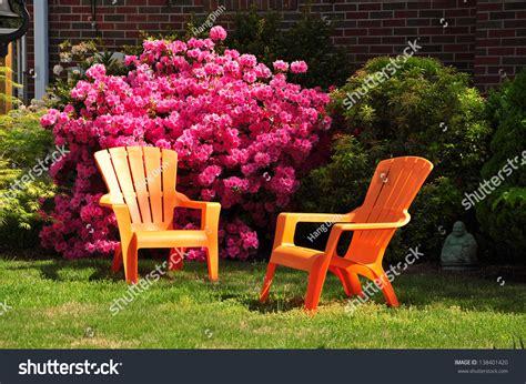 azalea flowers in garden of maryland usa stock