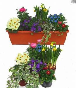 Winterharte Pflanzen Für Balkonkästen : pflanzen set f r 60 cm balkonk sten fr hling balkonk sten pinterest ~ Orissabook.com Haus und Dekorationen