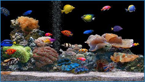 fish aquarium screensaver free car interior design