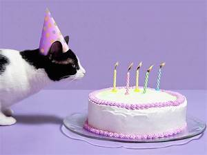 Cat Wearing Birthday Hat Blowing Out Candles On Birthday ...