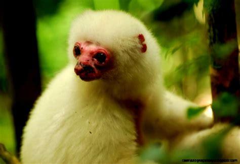 Endangered Animals Wallpapers - endangered rainforest animals list for wallpapers