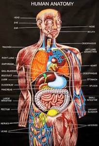 1000+ images about Human Anatomy and Physiology on ...