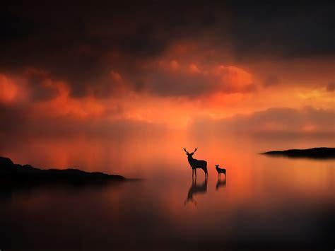 Animal Silhouette Wallpaper - sunset animals silhouette mist deer fawn 1920x1440