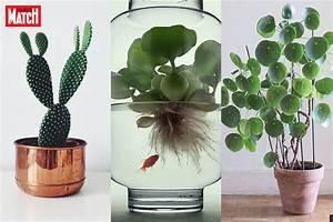 Plante Originale D Interieur Photos De Magnolisafleur