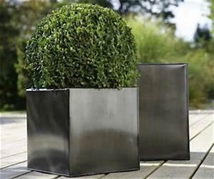 Gros Pot Pour Olivier : le bon pot pour chaque plante ~ Melissatoandfro.com Idées de Décoration