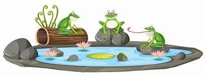 Pond Frog Vector Frogs Illustration Vectors Clipart