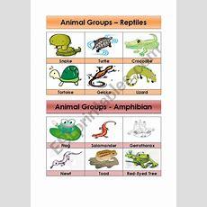 Animal Groupsreptiles And Amphibians (55)  Esl Worksheet By Amna 107