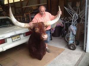 Design Text Over Image Vintage Watusi Taxidermy Shoulder Mount Obnoxious Antiques