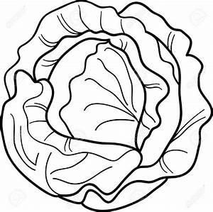 Lettuce cliparts