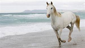 the white horses - Wallpapers Free