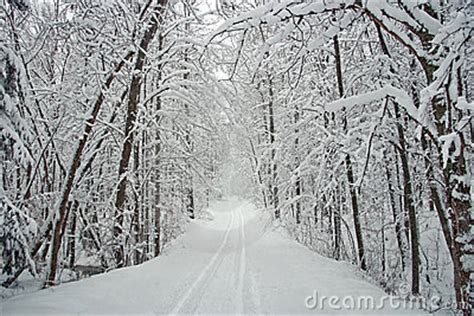 winter tree lined road  snow royalty  stock images