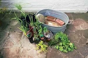 Miniteich Anlegen Zinkwanne : zinkwanne bepflanzen und als pflanzk bel oder miniteich gestalten zinkwanne bepflanzen ~ A.2002-acura-tl-radio.info Haus und Dekorationen