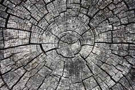 photograph  increase texture texture