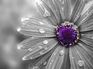 colorsplash_flower_by_xxmoonsirynxx-d3fw2h6.jpg (640×480 ...