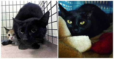 animal shelter cats in high places 24 hours before being euthanized fearful cat gets a Lesleys