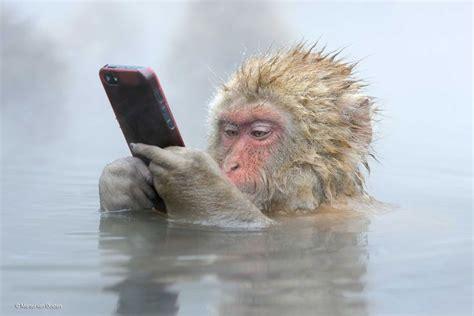 picture   monkey   iphone won  award