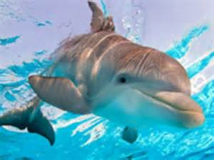 Dolphin Tale Winter and Hope