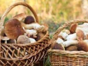 Cultiver Des Champignons De Paris Sans Kit : champignons tous nos sujets ~ Melissatoandfro.com Idées de Décoration