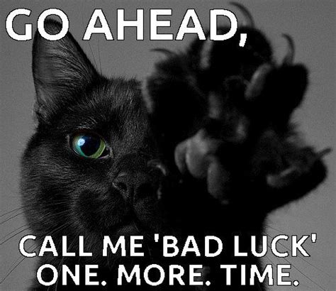 Black Cat Meme - pinterest discover and save creative ideas image 2987120 by yanito on favim com