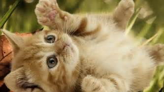 baby cats for baby cats 4 free wallpaper funnypicture org