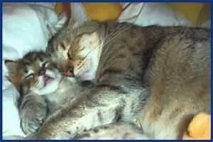 Lustige Katzen Bilder katzen bilder die sie zum lachen