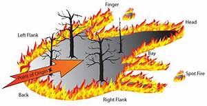 Media Guide To Forest Fires