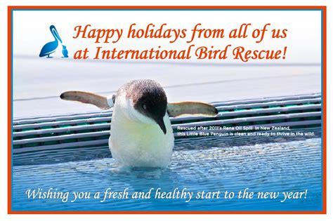 international bird rescue every bird matters 187 2011