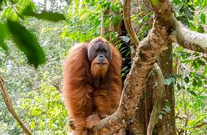8 of the World's Most Endangered Species
