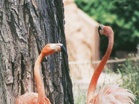 火烈鸟壁纸(第20张)_动物世界壁纸_高清桌面壁纸