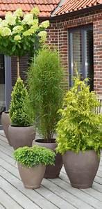 Pflanzen Sichtschutz Balkon : balkon xxl pflanzen ~ Eleganceandgraceweddings.com Haus und Dekorationen