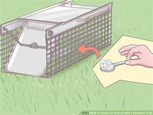 How To Catch An Animal With A Havahart Trap  7 Steps