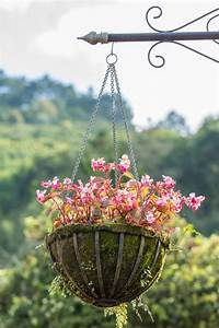 Creating Hanging Baskets