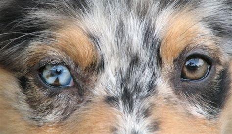 rare eye colors ideas  pinterest beautiful eyes pictures pretty eyes  amazing eyes