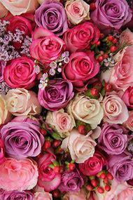 Pink Rose Flower Background Pinterest