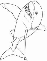 Coloring Pages Shark Printable Colouring Template Tale Wiet Gret Fish Drawing Animals Coloringpages101 Popular Coloringhome Designlooter Getdrawings Outline Searches Recent sketch template